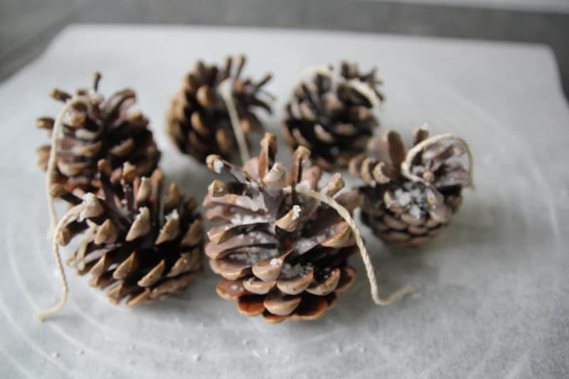 Pine Cone Fire Starter Dipped in Wax